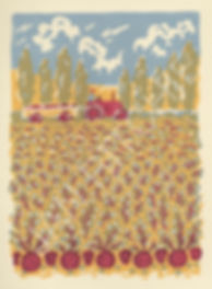 Beetroot-scan-1.jpg