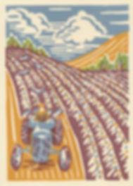 ploughing.jpeg2016-3copyright-429x600.jp