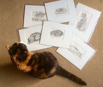 Cat Drawings.jpg