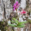 orquideas nativas