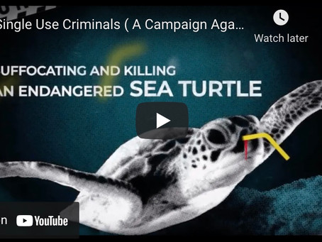 Single Use Criminals (A Campaign Against Plastic Pollution)