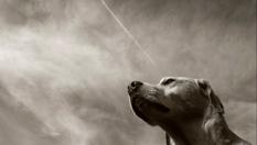 Daniel Sicard - Animales 6.png