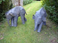Baby Indian Elephants
