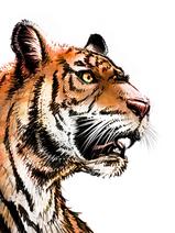 tiger_2.png