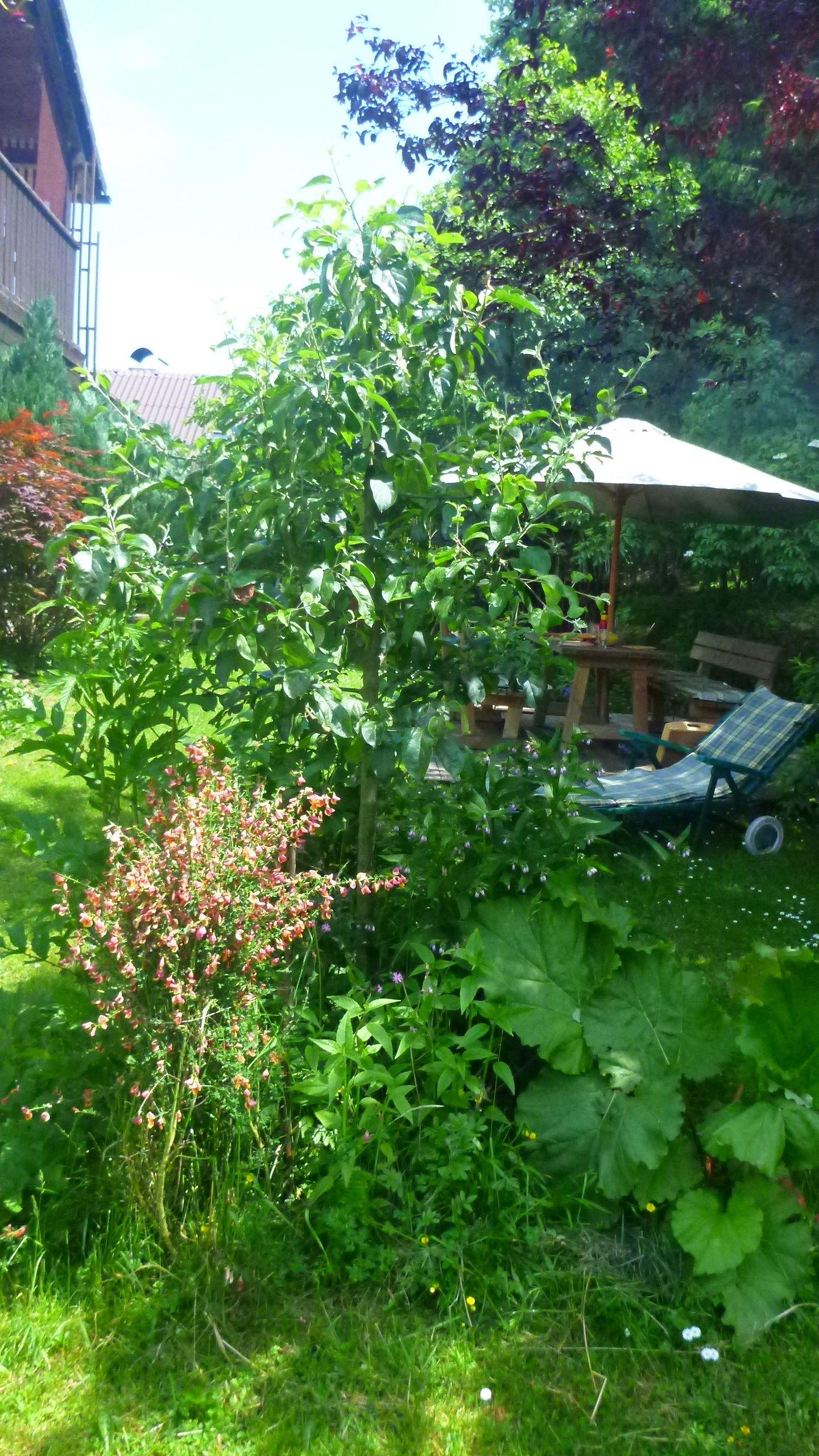 Bauminsel im eigenen Garten