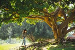 tree-690363_960_720.jpg