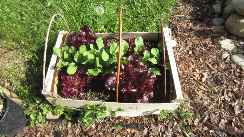 Salat im Holzkistl