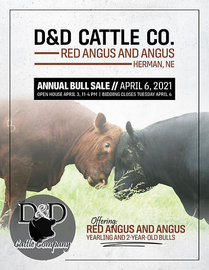 D&D Cattle sale catalog front cover.jpg