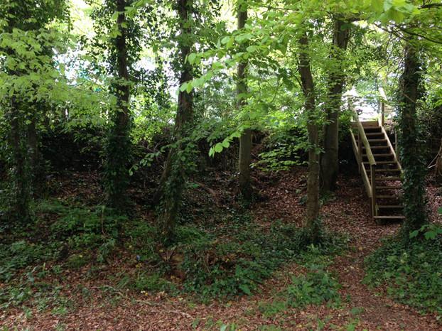Campsite steps and woodland