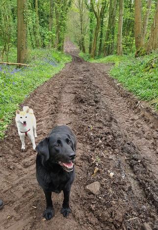 Walks in the castle woods