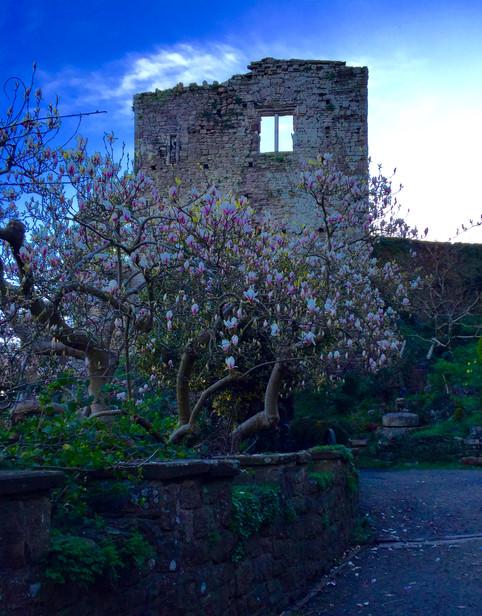 Keep and Magnolias