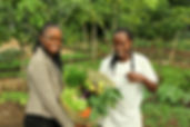 Fresh produce at the organic farms of Energy Africa
