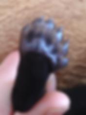 puppy_dewclaw.png