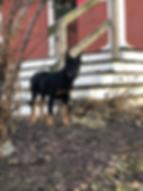 grailxhayley_puppy_zeda.png