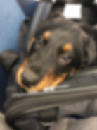 marquise_puppy_on_train_NYC.png