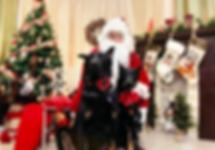 Harley_Juci_Santa.png