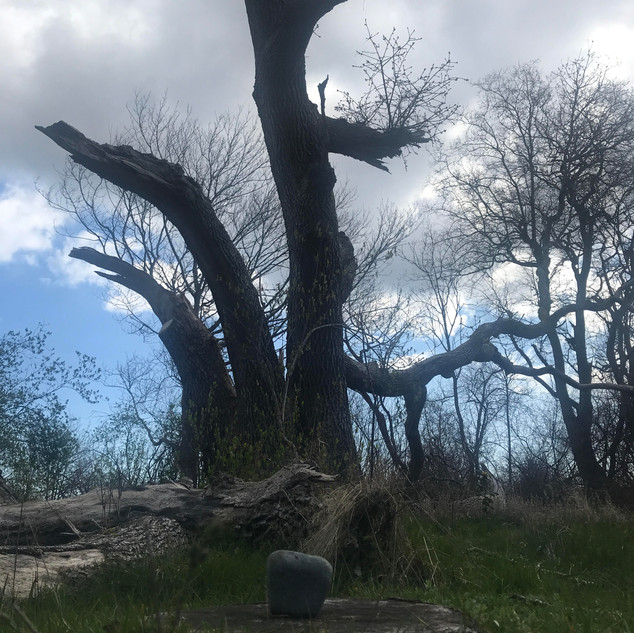 """J, aged 6 shares, """"This tree is special because it is so big and many branches have fallen off. It is kind to the soil because it talks to it. It's so old that it's nicknamed the grandparent tree."""""""
