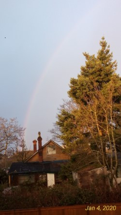 A rainbow envelopes the trees with love.