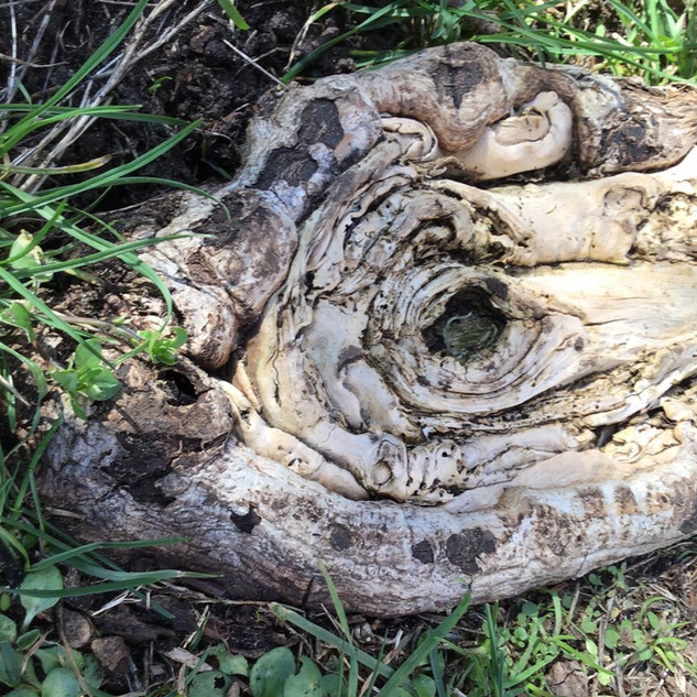 """C, aged 5 shares, """"When you look at these roots, you can see a fish!"""""""