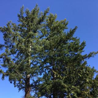 """E, aged 5 shares, """"I really like the shape of the tree."""""""