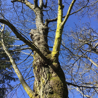 """P, aged 6 shares, """"I really like the branches of this tree."""""""