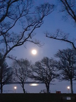 Kindness is a peaceful moon framed by earth's generous gifts.