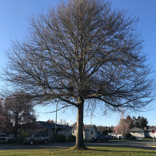 """J, aged 6 shares """"this tree is special because it is so big so it gives a lot of air. One tree gives air to twenty people to breathe. """""""