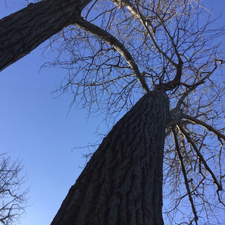 """A, aged 5 shares, """"I really like these kinds of trees. I like the branches."""""""