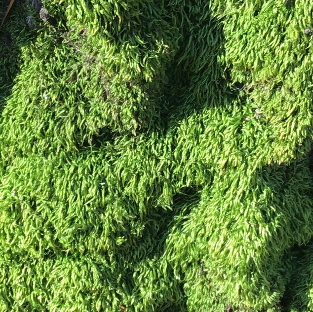 """N, aged 6 shares, """"I really like the moss and all of the details that you can see when you look close up."""""""