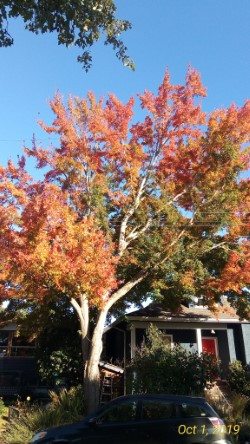 The joy of autumn!