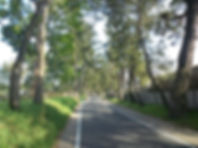 Tree lined street.jpg