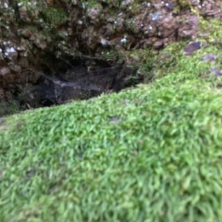"""J, aged 6 shares """"I really the moss and the hole inside."""""""