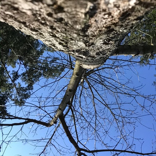 """A, aged 5 shares, """"I think this is a beautiful picture of the branches, trunk and bark of this tree."""""""