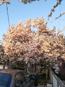 Magnificent Magnolia!!
