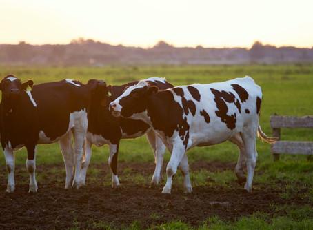 Wie sich unser Fleischkonsum auf Klima & Umwelt auswirkt