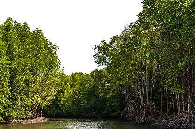 Praem Krasop Mangroves Sanctuary