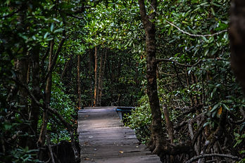 Paem Krasaop Mangroves Sanctuary