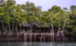Mangroves Sanctuary