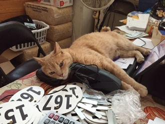 Orange cat laying on computer