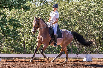 Colorful horse in dressage arena