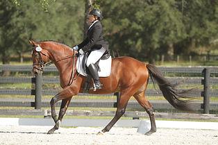 First Level Lengthening Canter.JPG