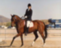 Bay dressage horse in Arizona