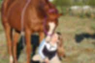 chestnut horse nuzzling groom