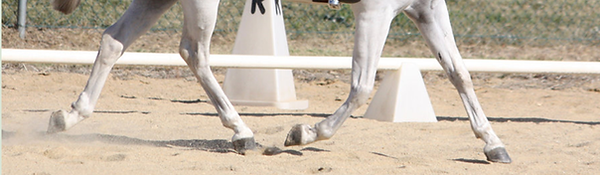 Gray horse in dressage arena