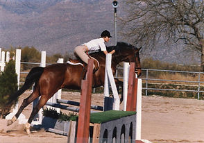 Bay horse jumping oxer fence