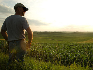 FINISHING up shooting the FARM FILM...