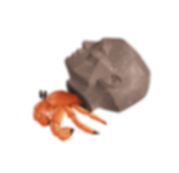 crab_in_head.png