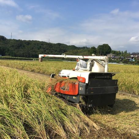 稲刈り作業中 (^o^)  近年は稲刈りが大分効率化してきました。