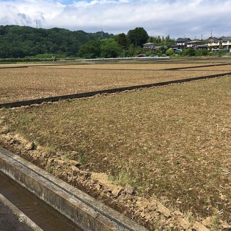 田植えが順調にはじまりました。美味しいお米とお酒が楽しみです。