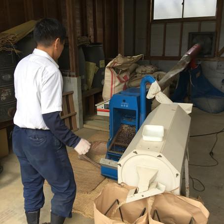 米の籾すり(モミスリ)作業中! 収穫したお米を玄米にして出荷準備。